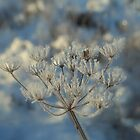 Frosted Seed Heads by Karen Martin