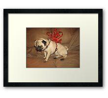 Pug with a Bow Framed Print
