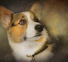 Dixie  by Kay Kempton Raade