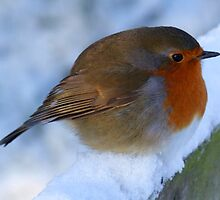 Robin in Snow by RuthMoore