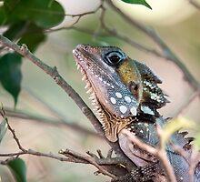 Boyds Forest Dragon by Jennie Gardiner