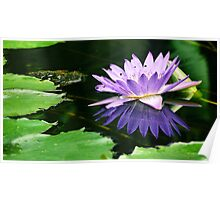 #607  Purple Lotus Flower Poster