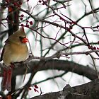 Female Cardinal by Dave & Trena Puckett