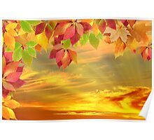 autumn leaves against the sunset Poster