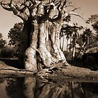 The Baobab Tree by mkdesigns