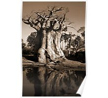 The Baobab Tree Poster