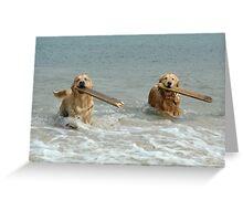 Golden Retrievers - retrieving sticks Greeting Card