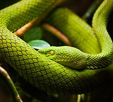 Green Eyed Devil. by Sharlene Rens