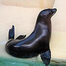Sea Lion by SuddenJim