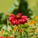 One Open Flower by Philip Alexander