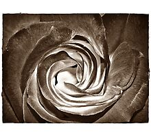 Black Rose Day Photographic Print
