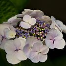 A Miniature Bouquet by Philip Alexander