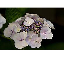 A Miniature Bouquet Photographic Print