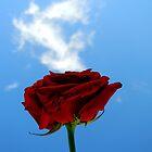 rose in the sky by melymiranda
