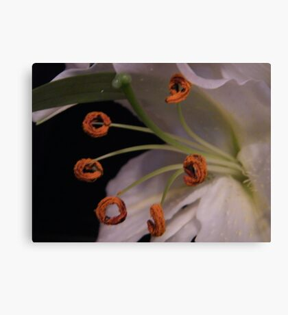 Lily Hoola Hoops Canvas Print