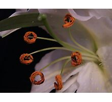 Lily Hoola Hoops Photographic Print