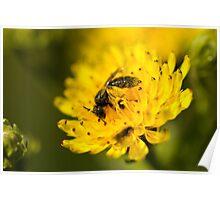 Coated in Pollen Poster