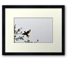Lorikeet 5 Framed Print