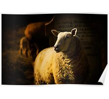 Graveside Sheep Poster
