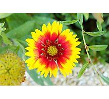 One Single Flower Photographic Print