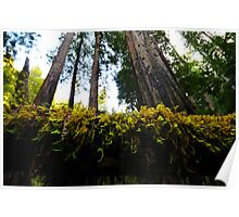 Californian Greenery Poster