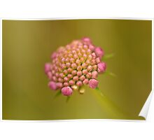 About to Bloom Poster