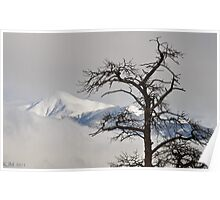 Barren Tree and Breaking Clouds Poster