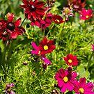 The Flower Garden by Philip Alexander