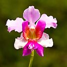 The Orchid by Philip Alexander