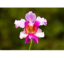 The Orchid Photographic Print