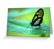 Glasswing Butterfly - Bolivia Greeting Card