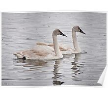 Twin Swans Poster