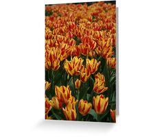 Red & Yellow Tullips, Botanica, Wichita Greeting Card