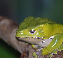 Green Frog by Craig Bernstein