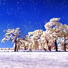 Winter Wonderland  by Pene Stevens