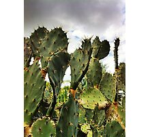 Cactus is King Photographic Print