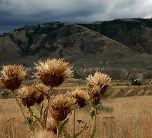 thistles by vernonite