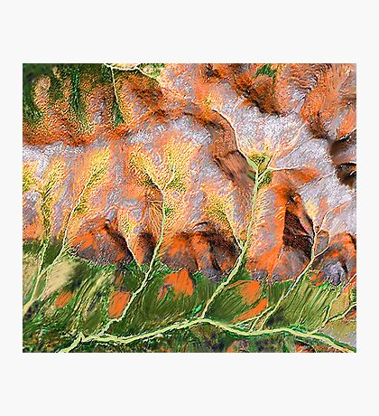 """Golden Trees""  Photographic Print"