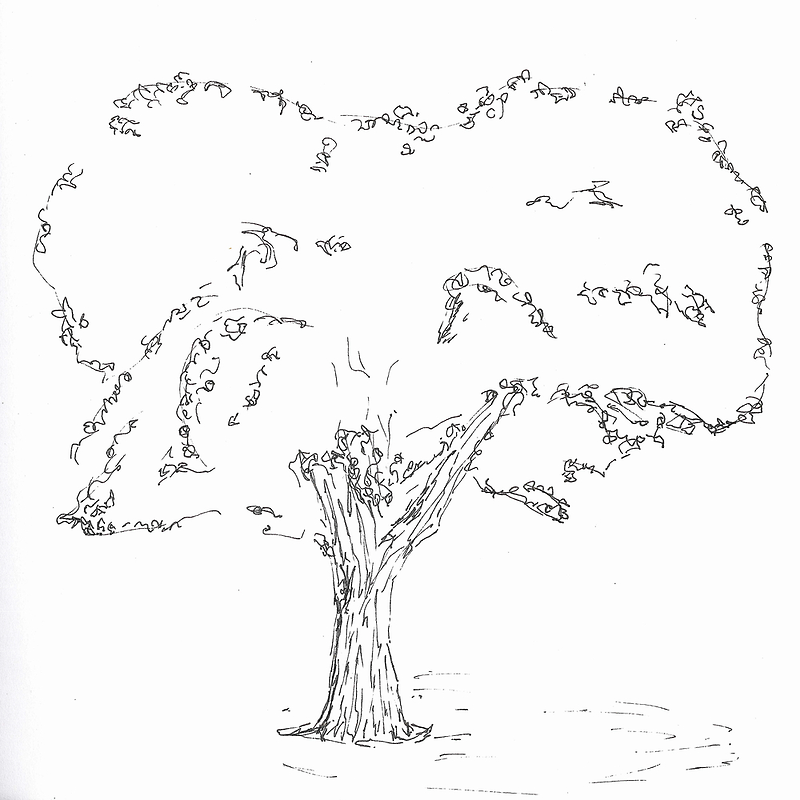 tree by dthaase