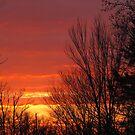 Blazing Winter Skies by Bonnie Robert