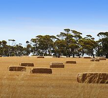 Hay Bales by Joanne Emery