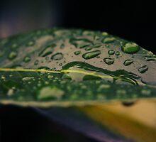 Rain Drops by mike35400