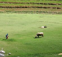 A Green Free Field in Sapa by draibolit