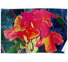 Bright reddish orange canna lily Poster
