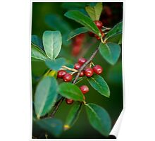 Autumn Olives Poster