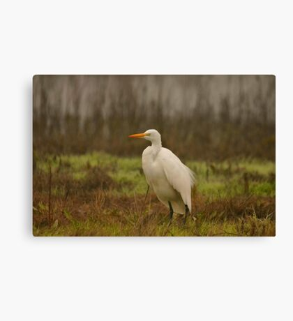 Egret in the Wetlands Canvas Print