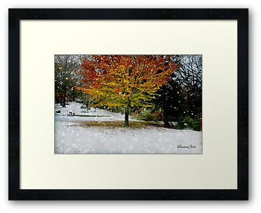 Beech Tree~ Caught in a Snow Flurry by SummerJade
