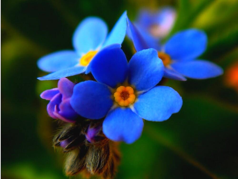 Little Beauty by Redrose10