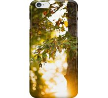 Tallahassee Winter iPhone Case/Skin