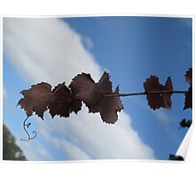 grapes vine Poster